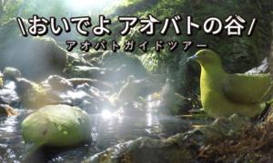 「おいでよアオバトの谷」2021群馬県上野村アオバトガイドツアー1st Season